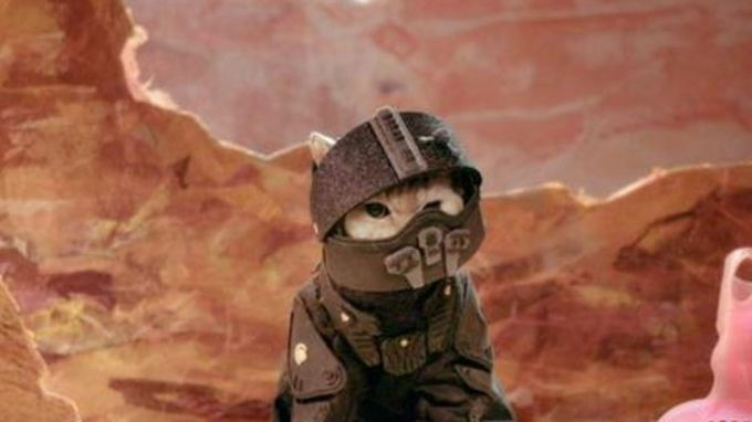 cat with sci fi costume on