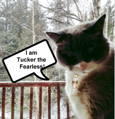 tuckerthefearless
