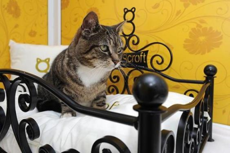 tabby cat in wrought iron kitty bed