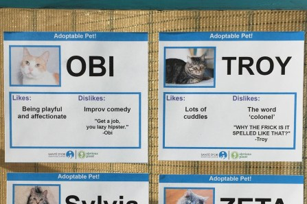 funny cat adoption cards