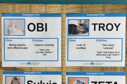 funny cat adoption cards