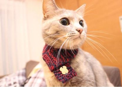 calico cat in hand knitted cat neck scarf