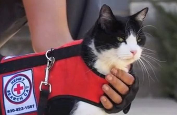 black and white cat who helps find lost felines