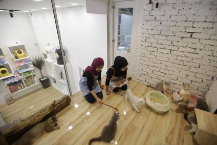 five star hotel in Kuala Lumpur for cats