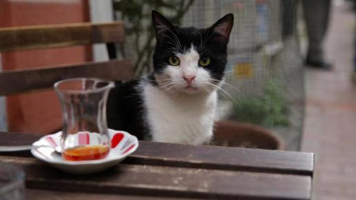 black and white cat from the Turkish movie Kedi,