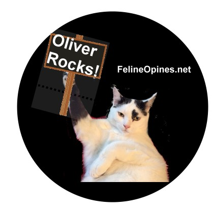 Oliver the black and white cat holding sign