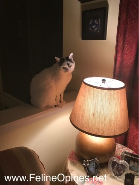 black and white cat sitting on ledge by lamp