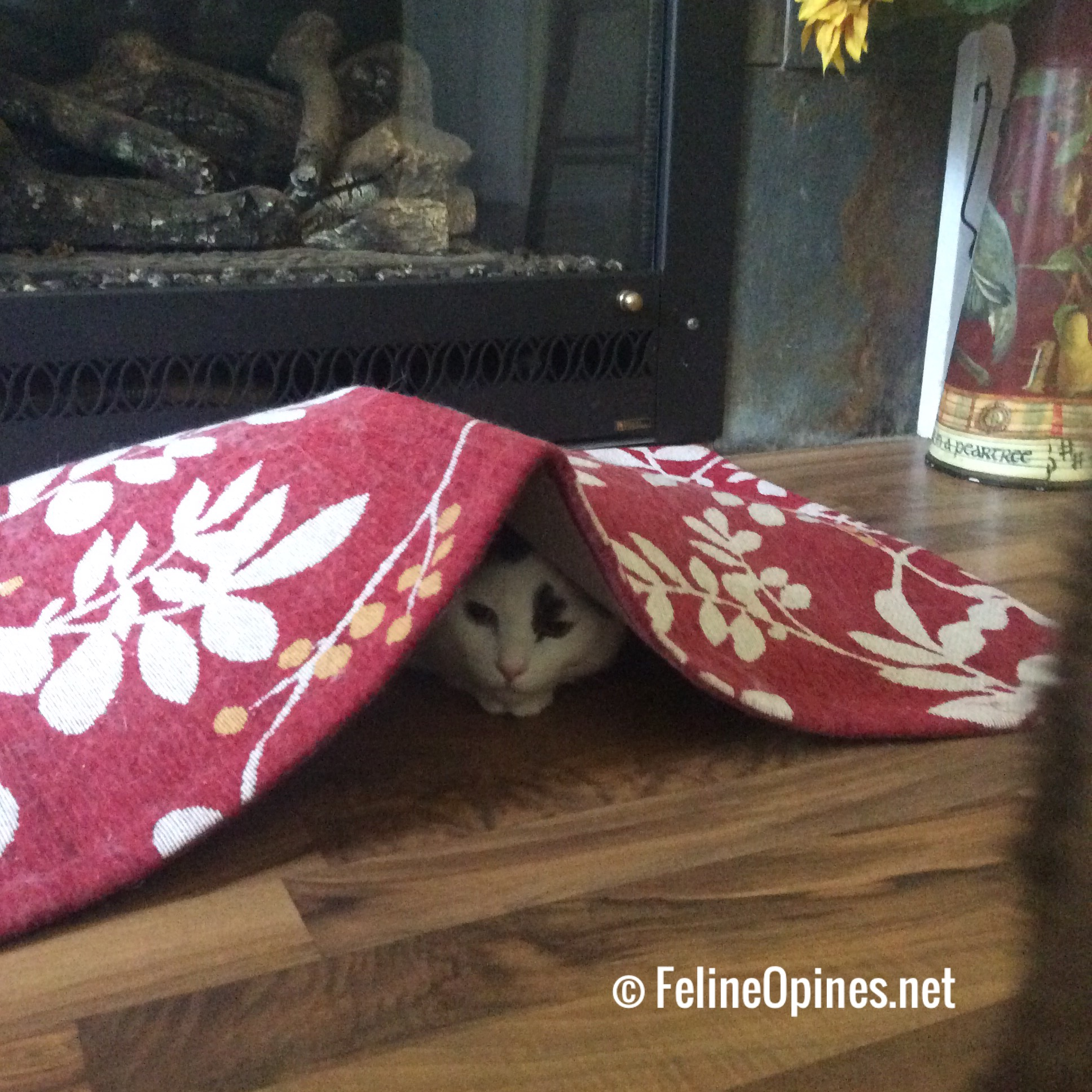black and white cxat hiding under red and white rug