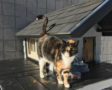 Calico mascot of the Boston SWAT team gets a new house