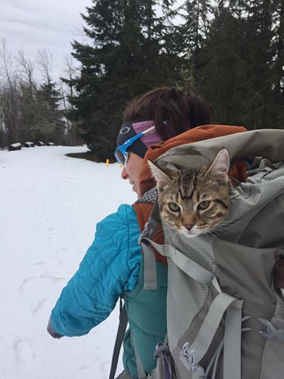 tabby cat peeking out of a knapsack in the snow