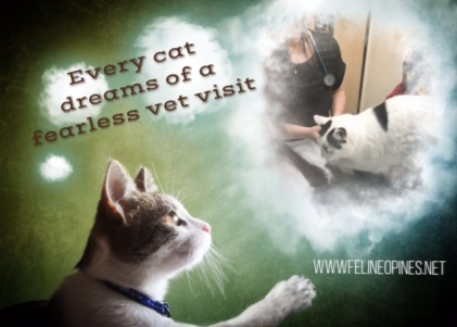 fearless vet visits for cats