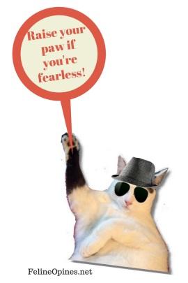 fearless vet visit oliver from feline opines