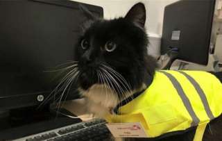 tuxedo cat wearing high vis vest at yorkshire train station