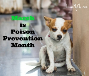 March-is-Poison-Prevention-Month