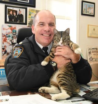 NYPDcat