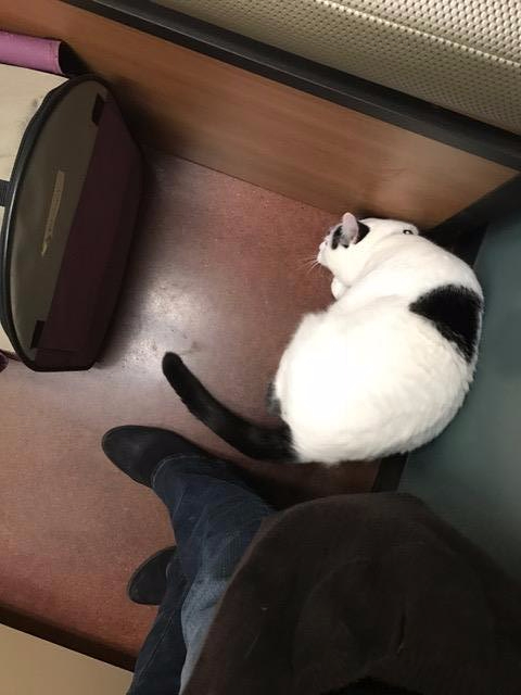 Oliver napping in the exam room at Pend Oreille Veterinary Service
