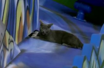 gray cat sneaks into Marlins opening season game