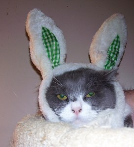 gray and white cat in bunny ears