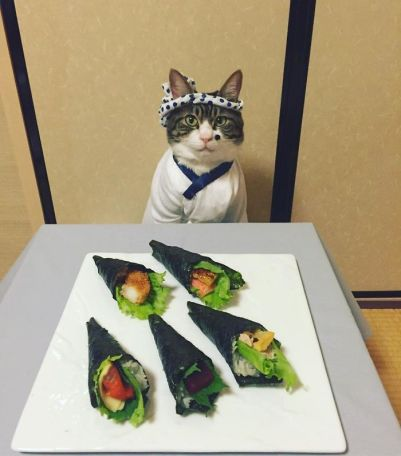 black and white cat dressed as sushi chef
