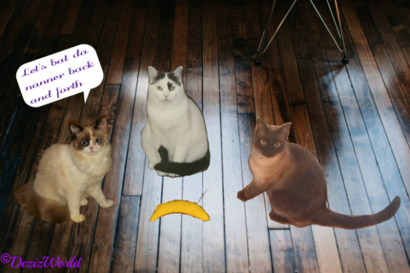 three cats play with a bananna toy