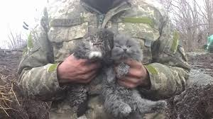 soldier holding kittens operation git mrow