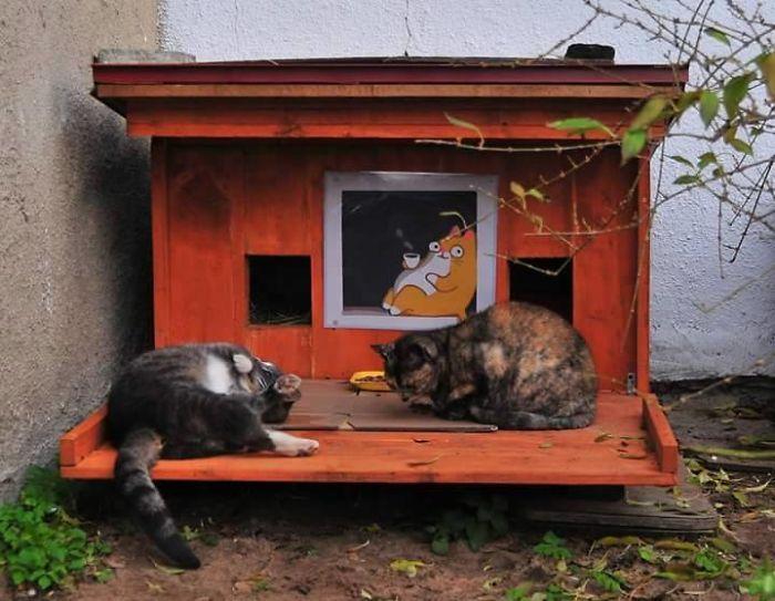 2 cats in feral tiny house in Riga, Latvia