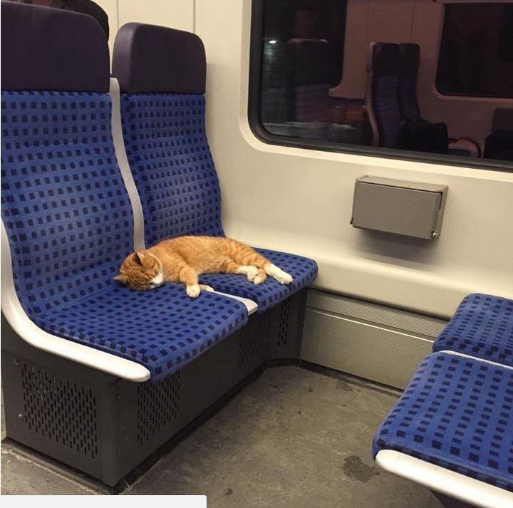 ginger tabby sleeps on free ride on German sibway