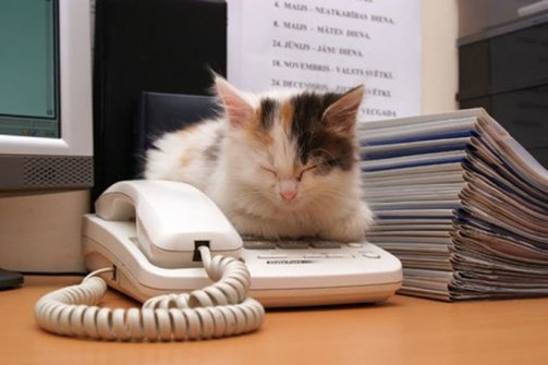 kitten from a cat library sits on phone