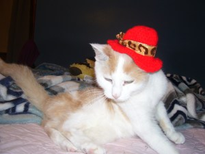 orange and white cat wearing a red hat