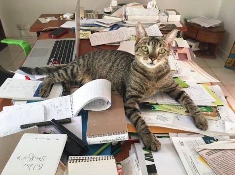 tabby ny times bureau cat
