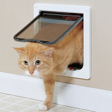 orange tabby cat coming in a cat door