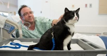 black and white tuxedo cat helps patients at hospital
