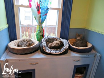 3 cats in beds at cat rescue