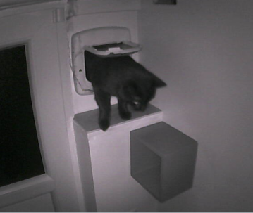 black cat going through cat door
