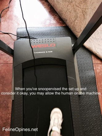 white sneaker on a treadmill