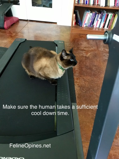 Siamese cat sitting on treadmikll