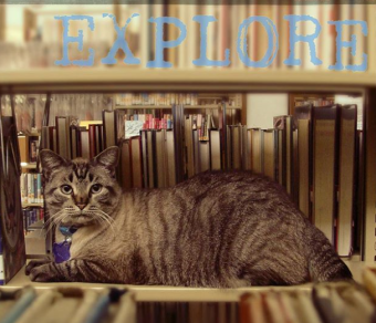 Browser the tabby cat works in a Texas library
