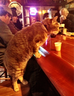 orange tabby Mr. Wu works in a New Orleans bar