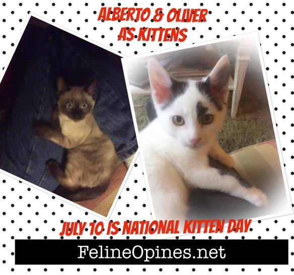 siamese kitten and black and white kitten celebrate national kitten day