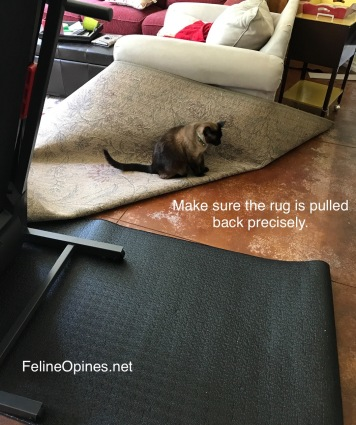 Siamese cat sits on rug pulled over for treadmill