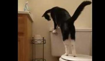 black and white tuxedo cat learns how to flush toilet