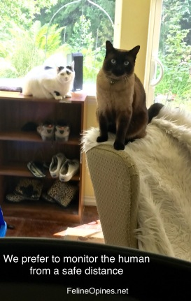 cats on furniture watching