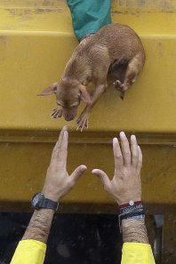 hands reaching to save dog during Hurricane Harbey