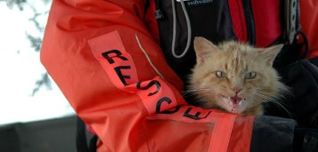 orange cat rescued after hurricane