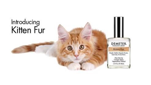 orange and white kitten next to a bottle of Demeter kitten scent perfume