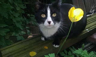 black and white cat by yellow flower