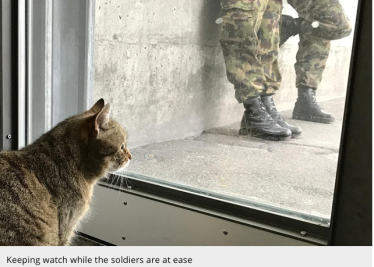 Tabby cat in the Swiss Army