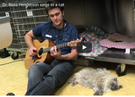 veterinarian plays his guitar for post surgery gray cat
