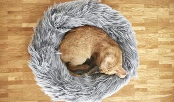 brown cat in fur Capello bed from Tuft + Paw