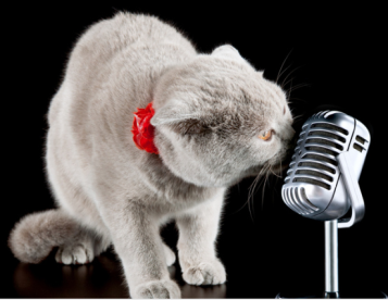 gray cat singing cat ballads into a microphone